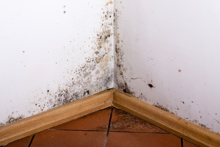 4 ways to prevent mold the geiler company