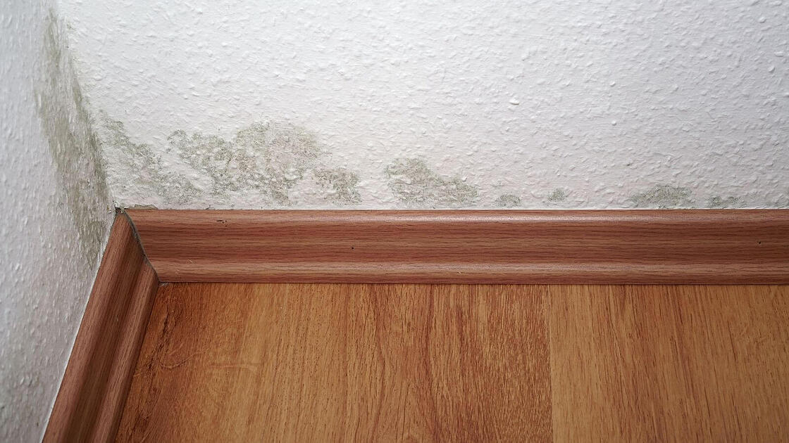 Does Humidity Cause Mold In A House_The Geiler Company