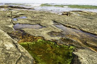 water taste algae the geiler company.jpeg